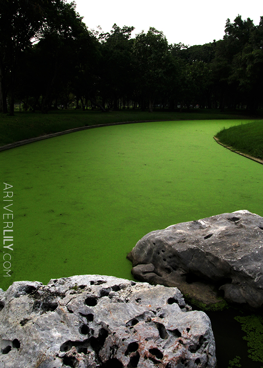 Travel Diary - Thailand Nakhon Pathom Buddhamonthon Park Phutthamonthon - algae stream pond