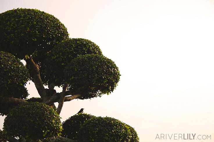 Travel Diary - Thailand Nakhon Pathom Buddhamonthon Park Phutthamonthon - tree bird